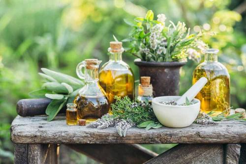 Taller: La Salud a través de la Magia de las Plantas